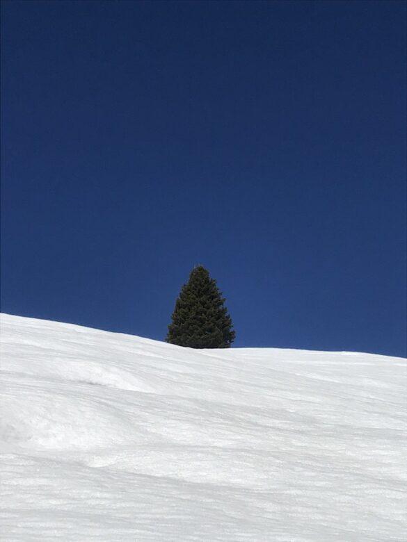 Einzelne Tanne auf dem Winterwanderweg