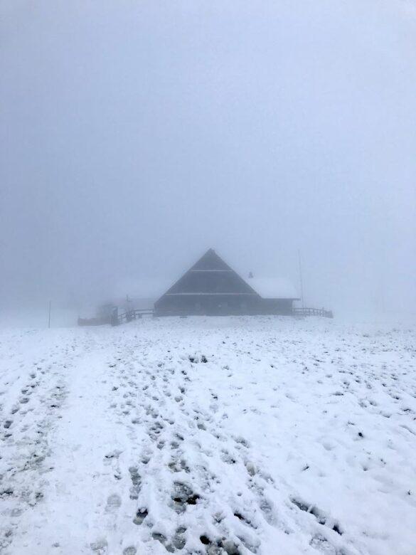 Holderen im Schnee