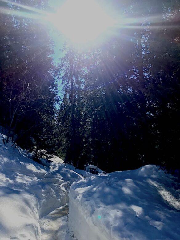 Sonnenlicht im Wald auf dem Winterwanderweg