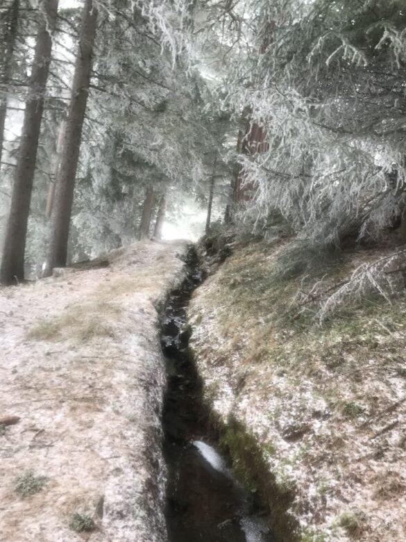 Suone im Winter, reifbedeckter Wald