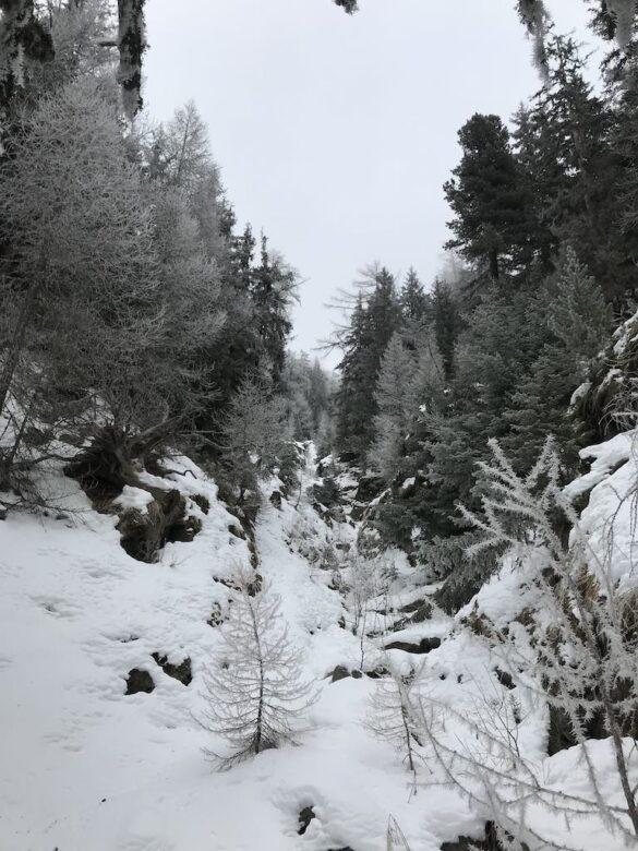 Verschneiter Wald bei Visperterminen