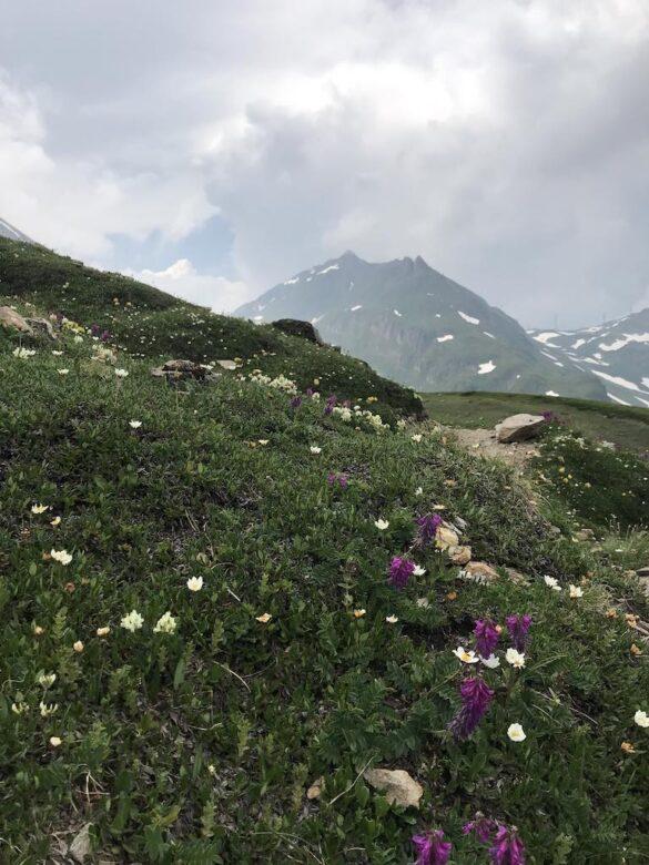 Alpweide bei Corno-Gries-Hütte