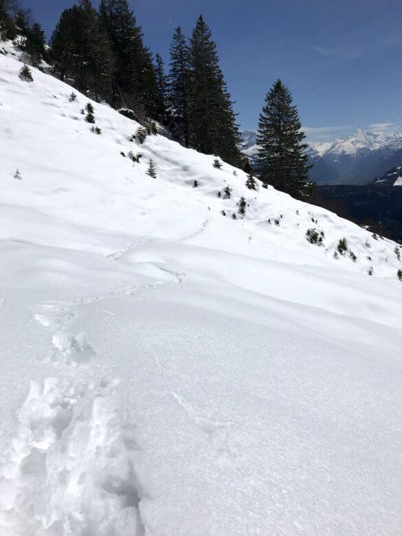 Beim Zilistock, wandern im Schnee