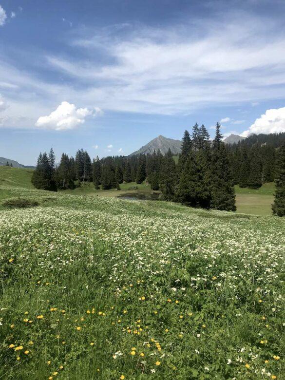 Blühende Alpwiese bei Bretaye