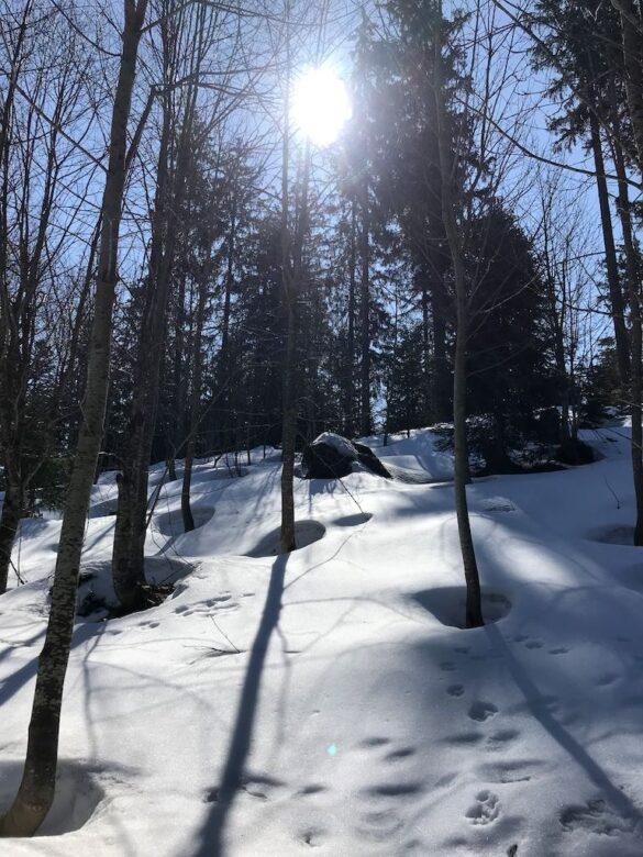 Schnee im Wald bei St. Jost