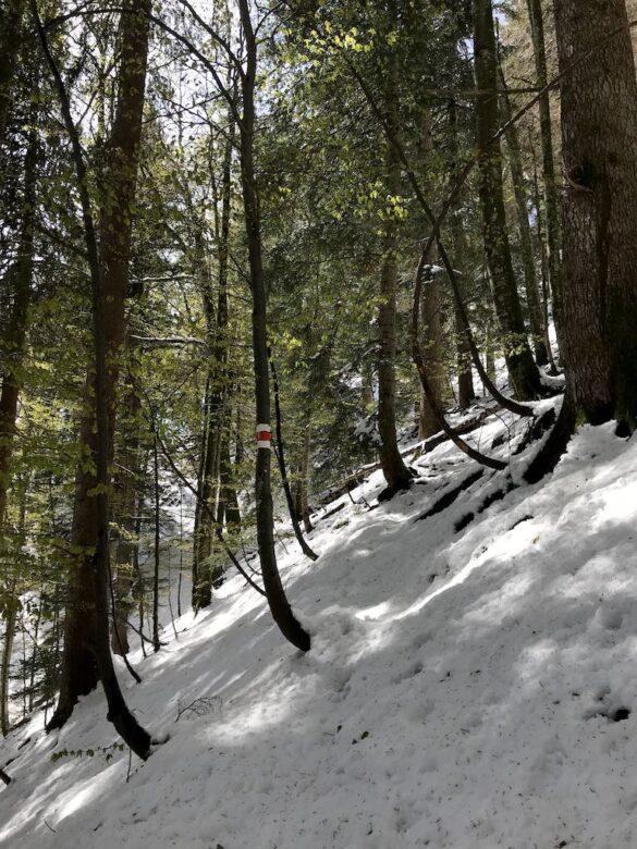 Verschneiter Wanderweg im Wald