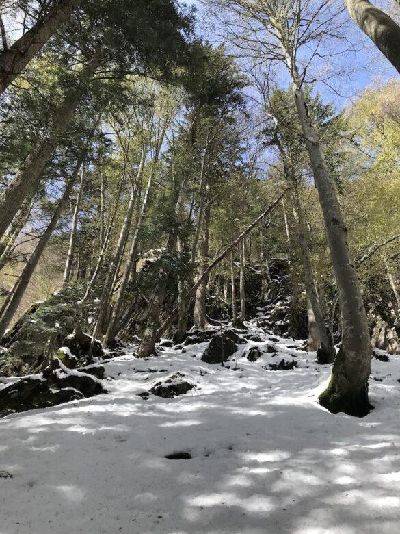 Wald bei Hoflue mit Schnee