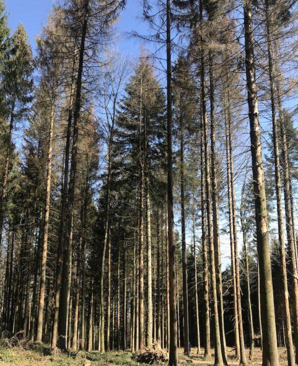 Wald beim Pfannenstiel