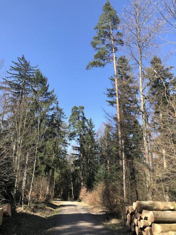 Wanderweg im Wald auf dem Pfannenstielweg