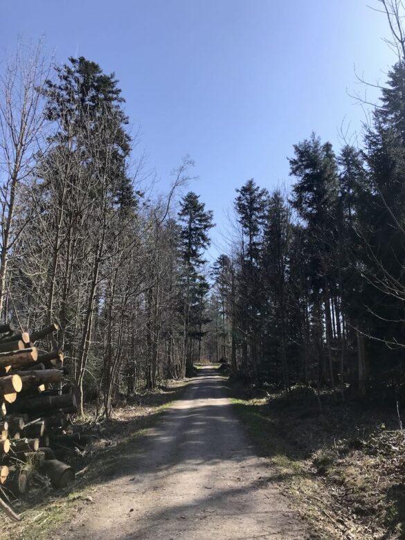 Wanderweg bei Chüelenboden