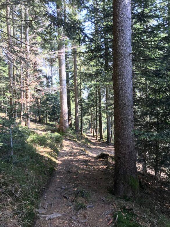 Wanderweg im Wald bei Mangelhöhe