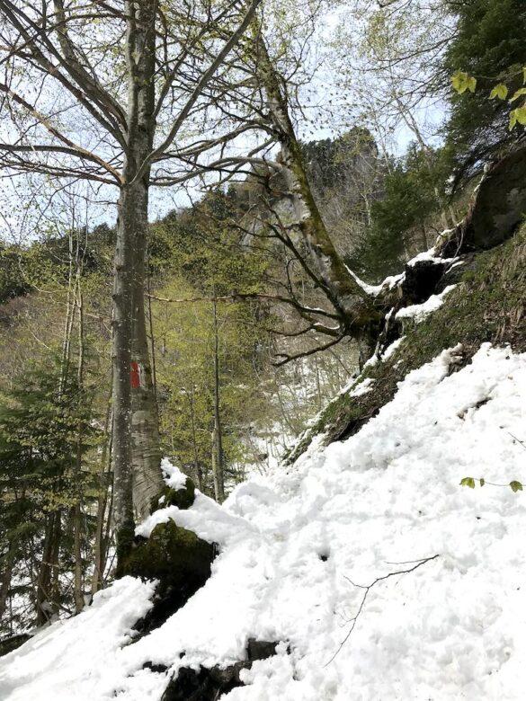 Wanderweg mit Schnee