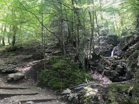 Bergbach, Tobel, Wald nahe Wasserauen