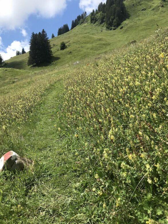 Wanderweg über Bergwiese nach Gräppelensee