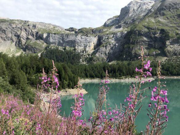 Lac de Tseuzier mit Bergblumen
