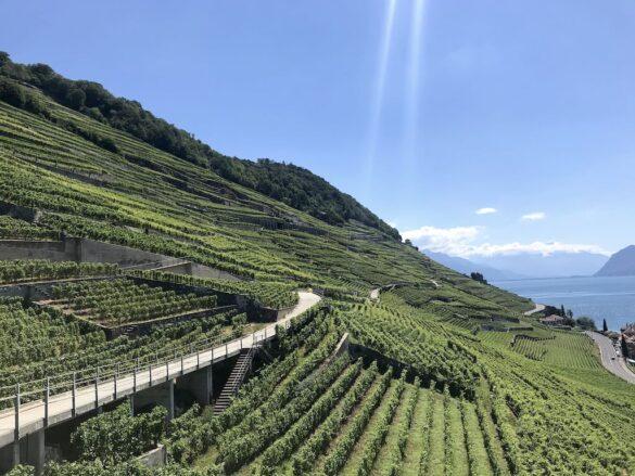 Weinberge im Lavaux