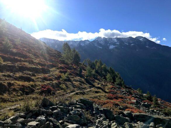 Alpwiese im Herbst