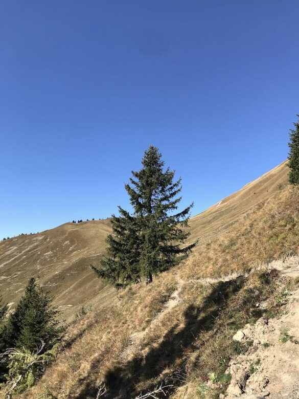 Bergwanderweg nach Seewis