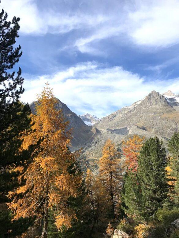 Herbststimmung im Aletschwald