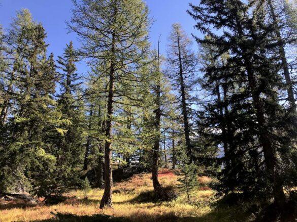 Herbstwald auf dem Panoramaweg