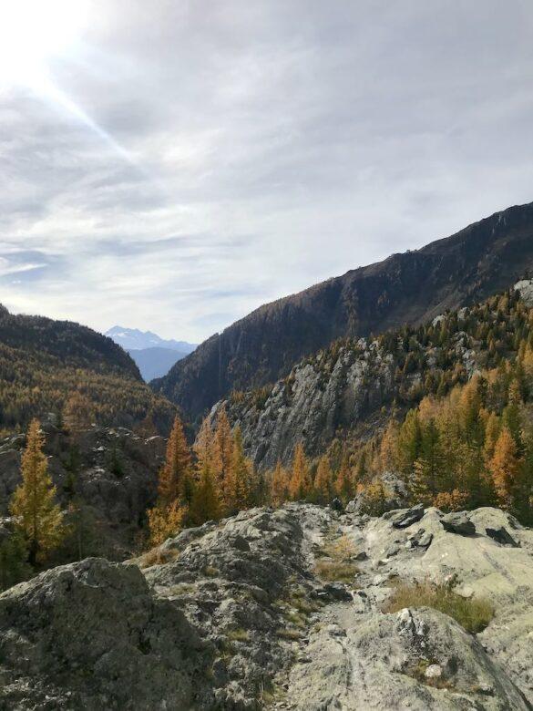 Herbstwald beim Aletschgletscher