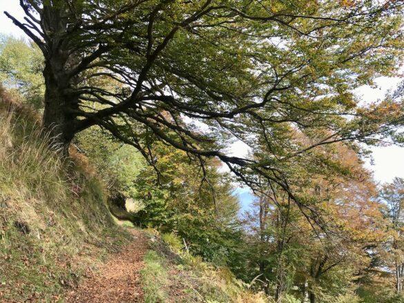 Wanderweg bei Casone