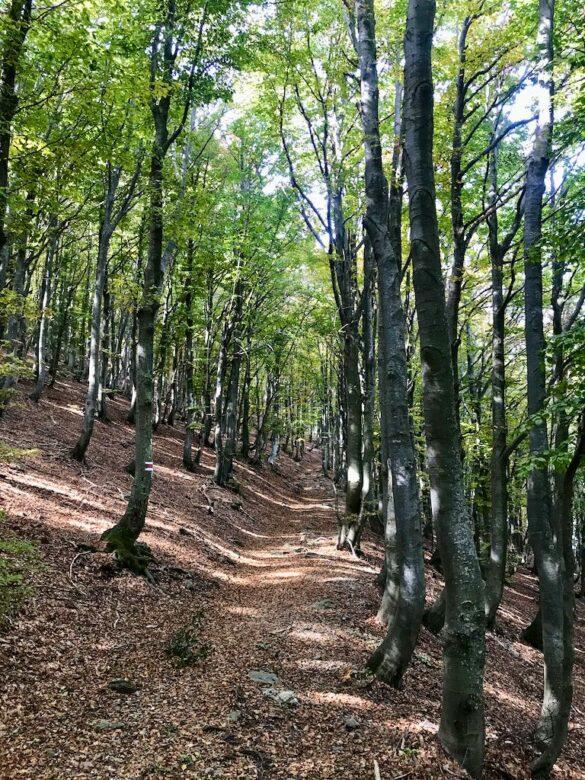 Wanderweg im Buchenwald im Centovalli