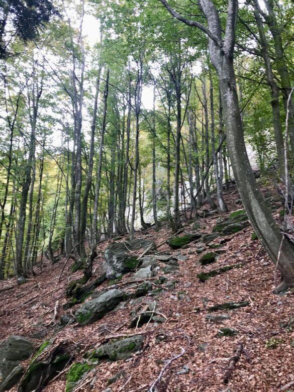 Wanderweg im Wald im Centovalli