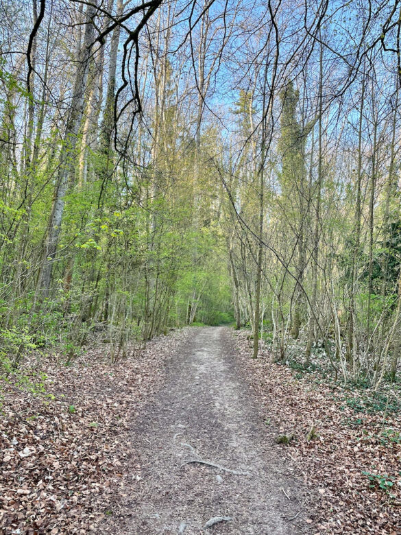 Wanderweg im Wald bei Orbe