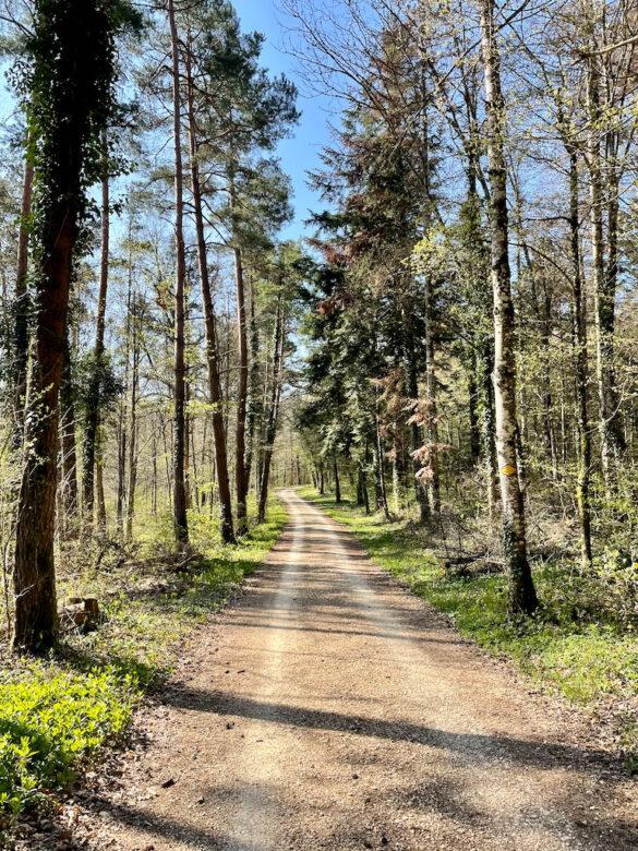 Wanderweg im Wald bei Romainmôtier
