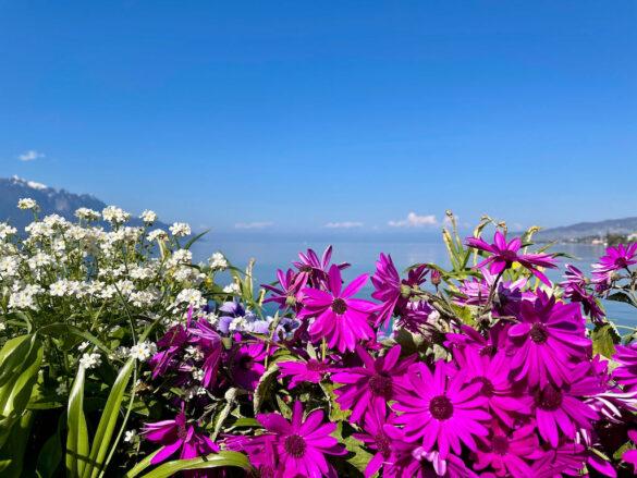 Blumen am Genfersee